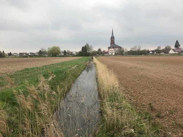 Foto: in der Mitte von vorne ein schnurgerader Wasserlauf zwischen 2 Äcker fast ohne Randstreifen, im Hintergrund Schuttern mit Kirche