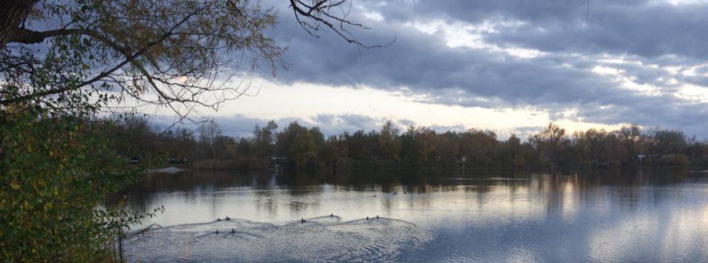 Foto: See mit Enten, im Hintergrund Ufer mit Bäumen, blauweißer Himmel